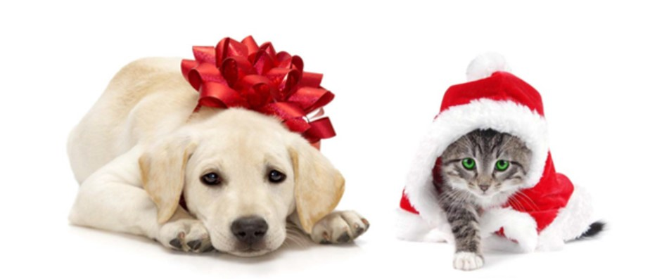 dog and cat holiday bows